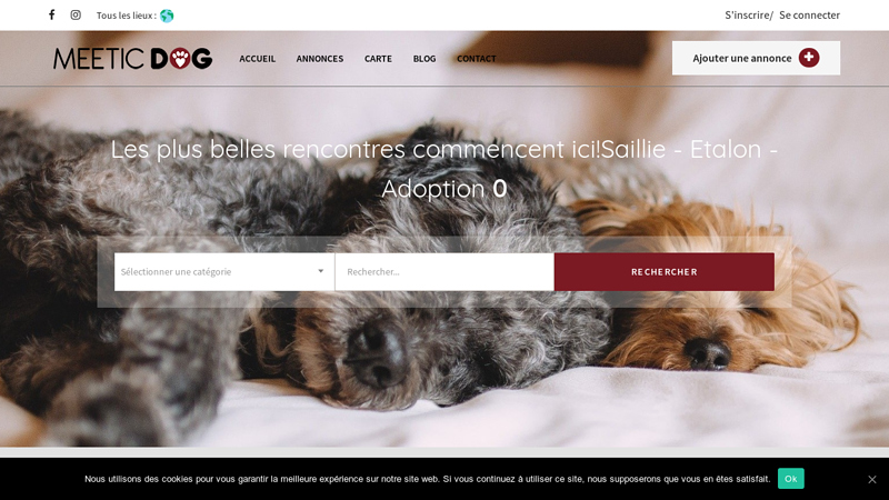 Meetic dog